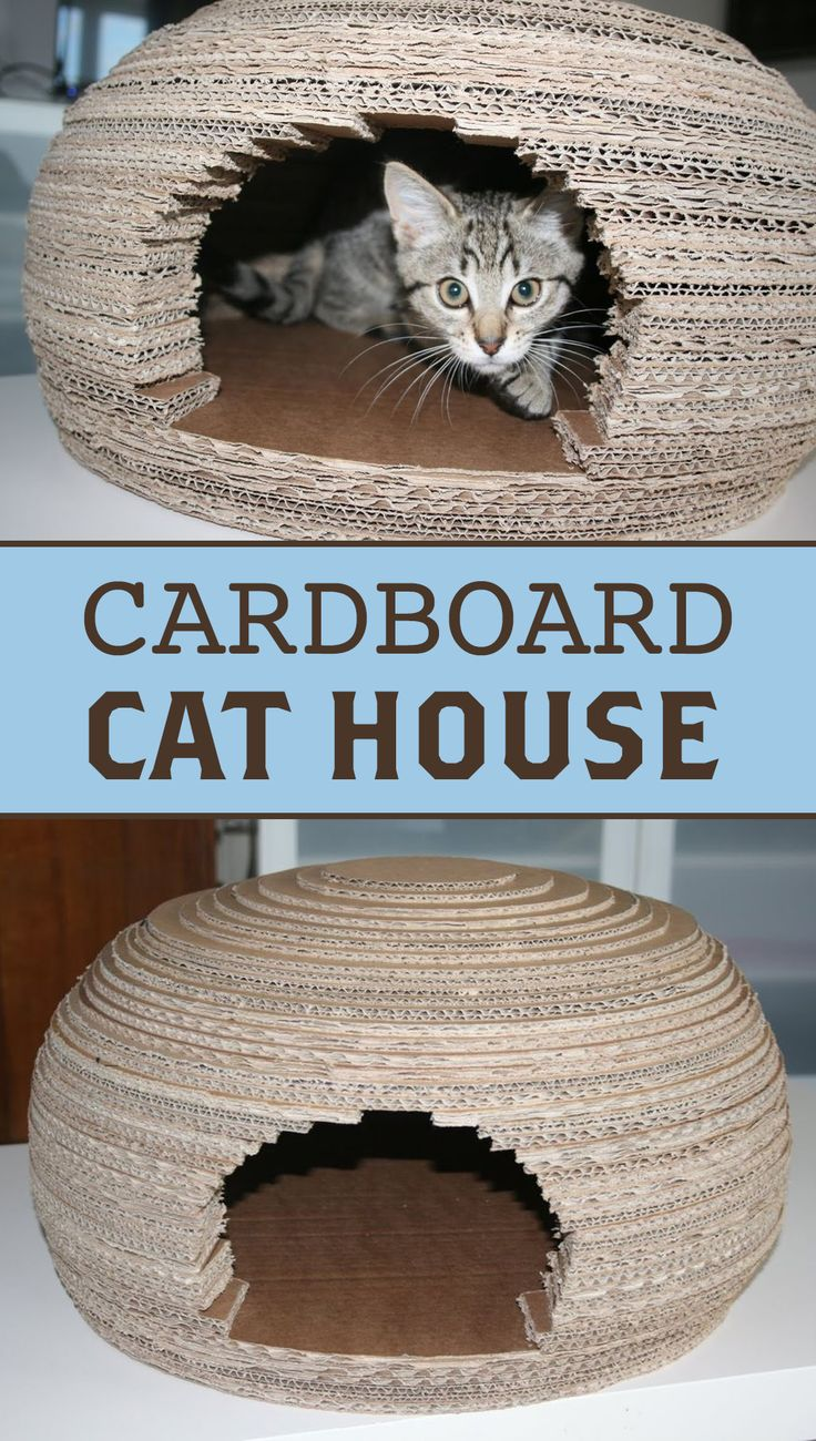Make a cozy little house for your favorite kitty!
