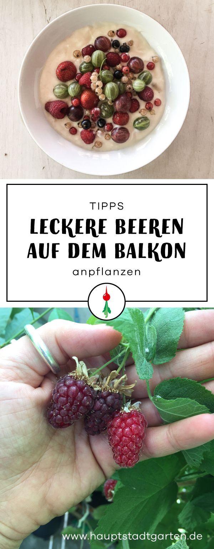 Beerenbuffet auf dem Balkon – plants and flowers #blogstlove