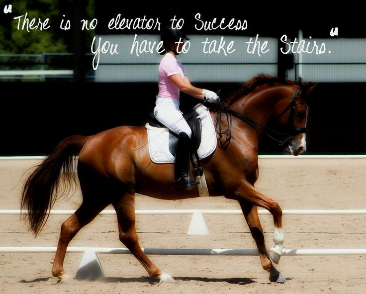 "Love this quote! And so true for horses! ""There is no elevator to success, you have to take the stairs."""