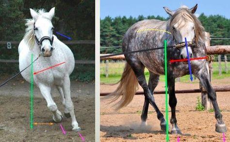 Richtig Longieren! Was die Longe alles für dein Pferd tun kann. Longieren kann Spaß machen, Balance und Vertrauen bringen, Bindung und ein gutes Körpergefühl, Muskelaufbau und noch viel mehr. Wenn man es richtig macht. Wie das geht, erklärt dir jetzt die Longenexpertin Babette Teschen.