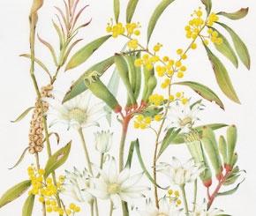 Mixed flowers (Australian Natives)