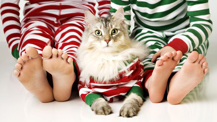 49 best christmas kitties images on pinterest christmas animals adorable christmas pet photography matching onsies with kitty spiritdancerdesigns Choice Image