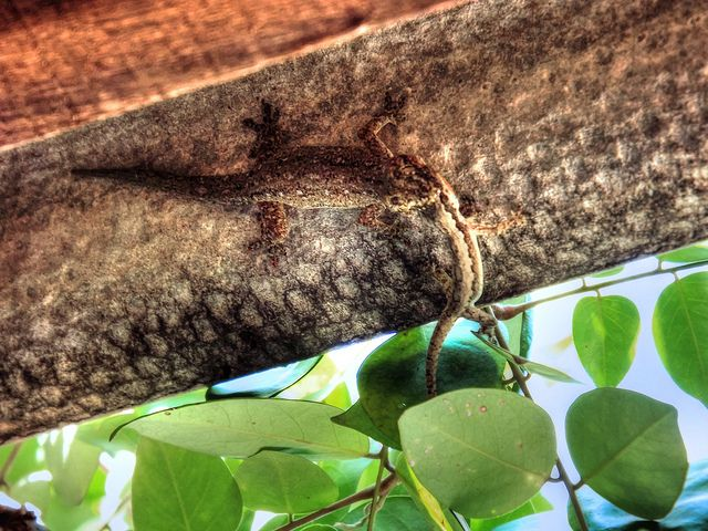 perfect kill #lizard #reptil