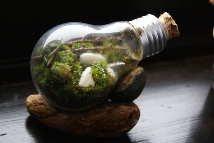 light bulb terrarium DIY tutorial