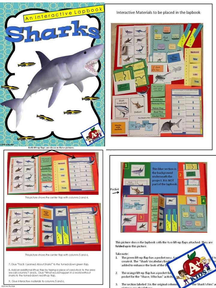 $ Use interactive materials and informational text to create fun, fact-filled lapbooks about sharks and how they live.  Your kiddos will learn about sharks and their environment and then use the information to take notes and document facts in the shutterfold, diagrams, pockets, flipbooks and foldable notes included in this dynamic resource. Directions to create the interactive materials and the lapbook are included.  Great for sub plans. More than enough work for an entire day.