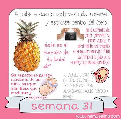 BebeBlog by mimuselina: Semana 31 embarazo. Tamaño y evolución del bebé @m...