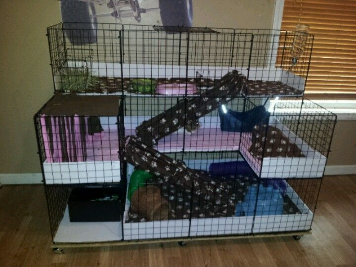 17 best images about animals on pinterest guinea pig for Wire guinea pig cages