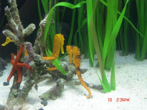 Custom fish tank stand and canopy woodworking projects for Seahorse fish tank