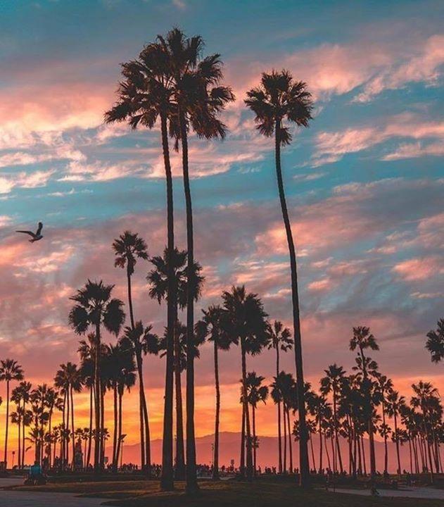 Venice California by Scott Lipps   California Feelings