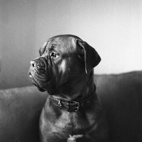 ¿Cuál perfil os gusta más? ;) #perros#dogs #mascotas