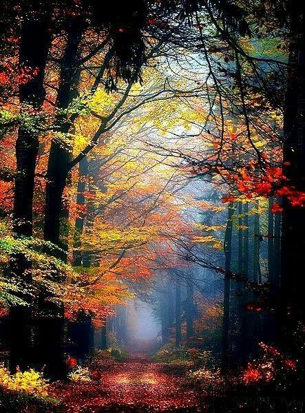 Colourful forest.