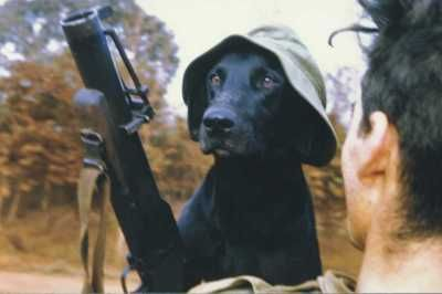 Eleven of the most popular contributors to the Australian war effort in Vietnam could not return home when their tour of duty ended. They were the black labrador tracker dogs used by the Australian Task Force. It was Australian Army policy that the dogs not be brought home at the end of their service.