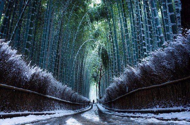 Бамбуковый лес в снегу, Киото, Япония