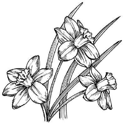 To draw a daffodil, examine the drawing of a daffodil before proceeding to step 1.