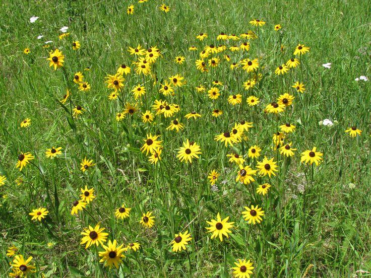 Wild flowers abound!