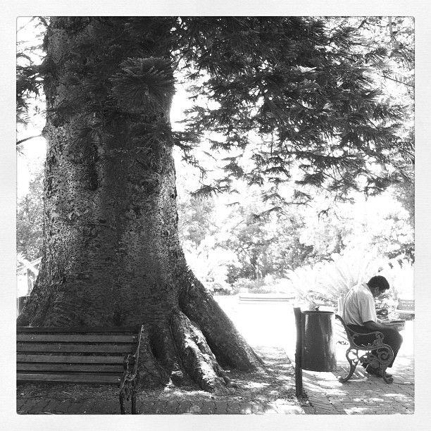 #tree #park #nature #reading Quiet #Sunday
