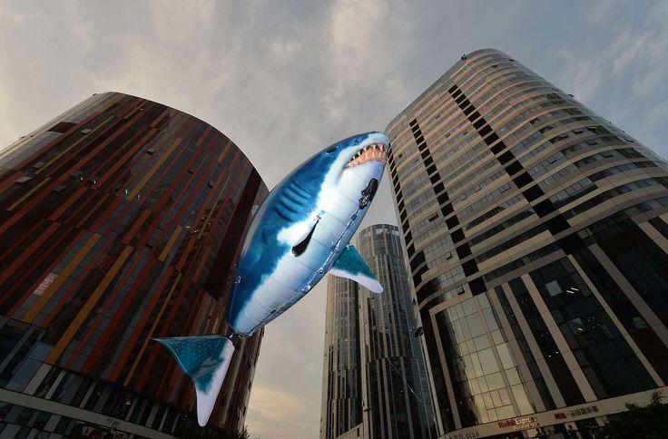 """""""No Shark Fin"""" en Beijing la campaña para tratar de convencer a los chinos no consumir sopa de aleta de tiburón, que es un manjar local."""