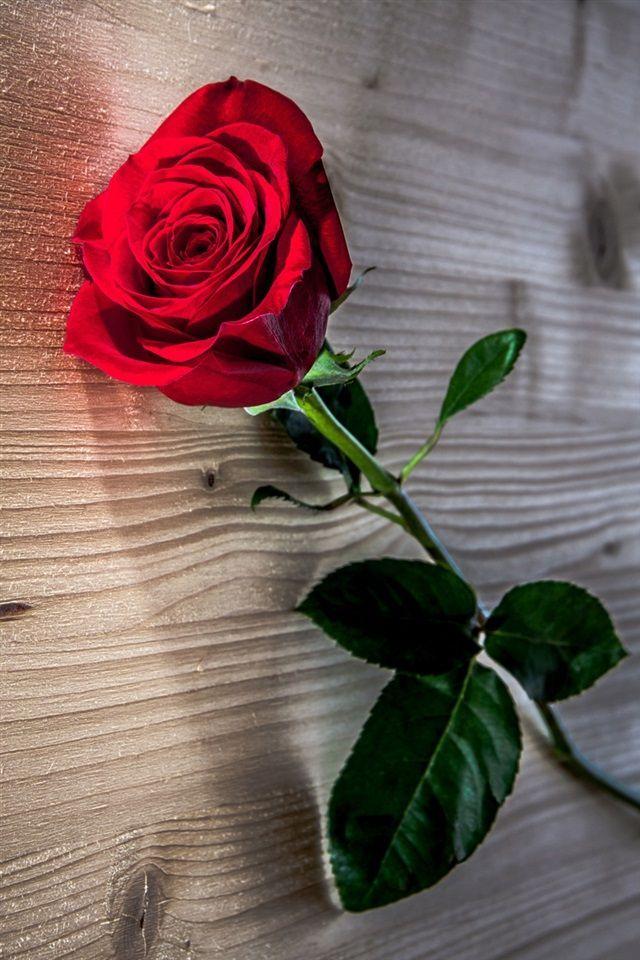 ꮲɪɴᴛᴇʀᴇ Sᴛ Sɴᴇᴀᴋᴇʀ ʙᴀᴇ ورود رومانسية للاهداء Beautiful Rose Flowers Beautiful Roses Beautiful Flowers