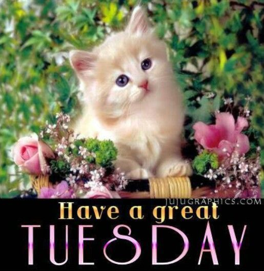 Have A Great Tuesday | Good morning | Pinterest | Tuesday ...
