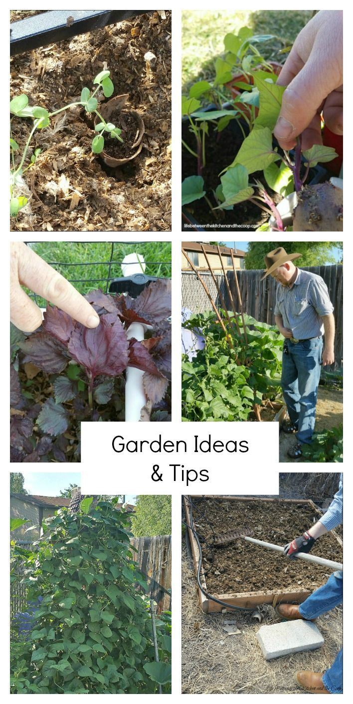 I have collected a bunch of my best garden ideas for you to give you some inspiration for planning, planting, and harvesting your own garden. You can learn how to minimize the weeding that has to be done in your garden, how to plant starter plants and then transplant them, how to build a custom garden irrigation system, and more! I'm sharing some of my best gardening tips with you, along with some helpful gardening product suggestions!