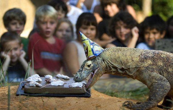 Komodo Dragon Facts For Kids | Komodo Dragon Diet & Habitat