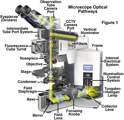 24 Best Microscope Amp Telescope Images On Pinterest