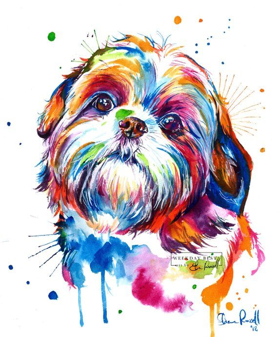 Impresión colorida de la acuarela de Shih Tzu – impresión del arte de mi pintura original (envío gratis)