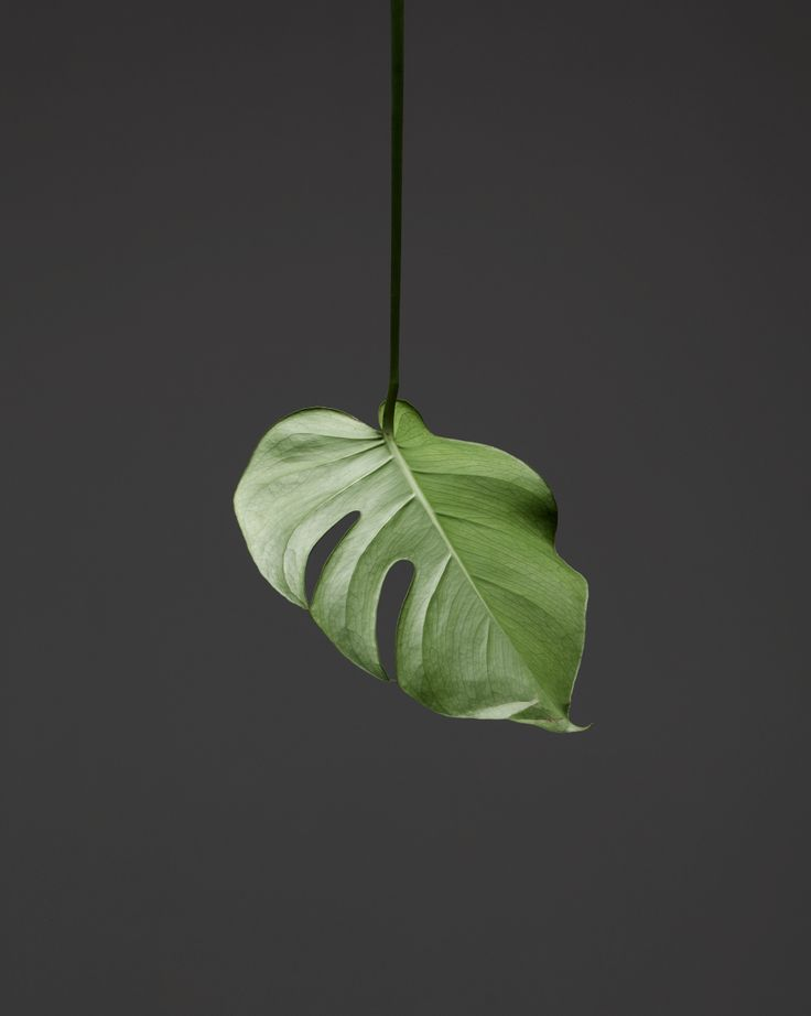Brooke Holm - I have potentially found a new favourite photographer.  Brooke Holm's work is unbelievably beautiful, form her still lifes to her landscapes.  I love the simplicity of this photograph and the highlight on the leaf.
