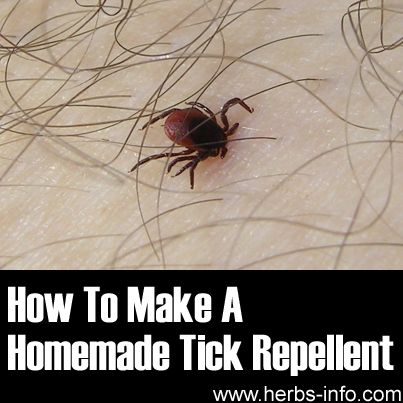 How To Make A Homemade Tick Repellent Using Essential Oils - Herbs Info