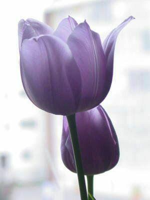 Una flor cada día.. ..