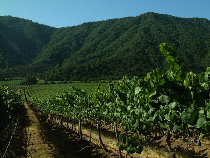 Emiliana - Organic Vineyards - Excellence in Nature in the Casablanca Valley