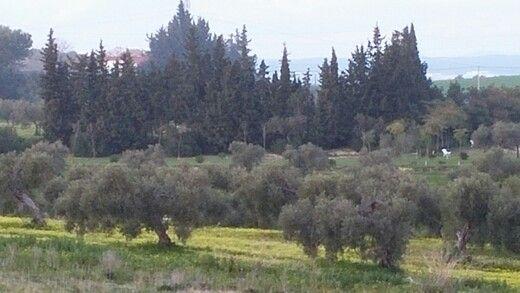 Campos de Valencina