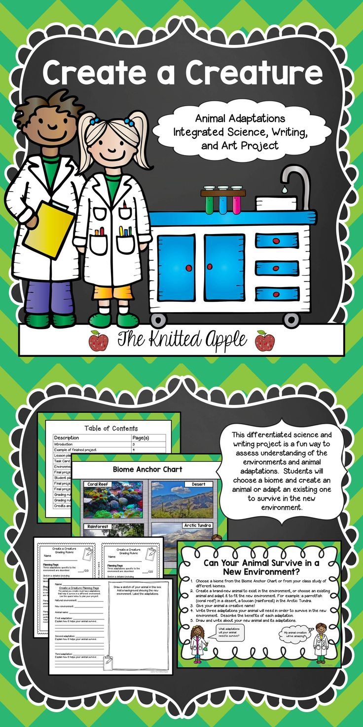First grade life science worksheets what do animals eat 1 - First Grade Life Science Worksheets What Do Animals Eat 1 Animal Adaptations Project Science Writing Download