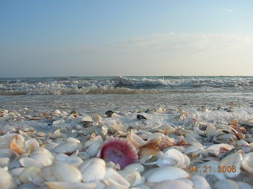 """Sanibel Island, FL!  One of my favorite places on earth!  I must have my """"seashell fix"""" at least once a year."""