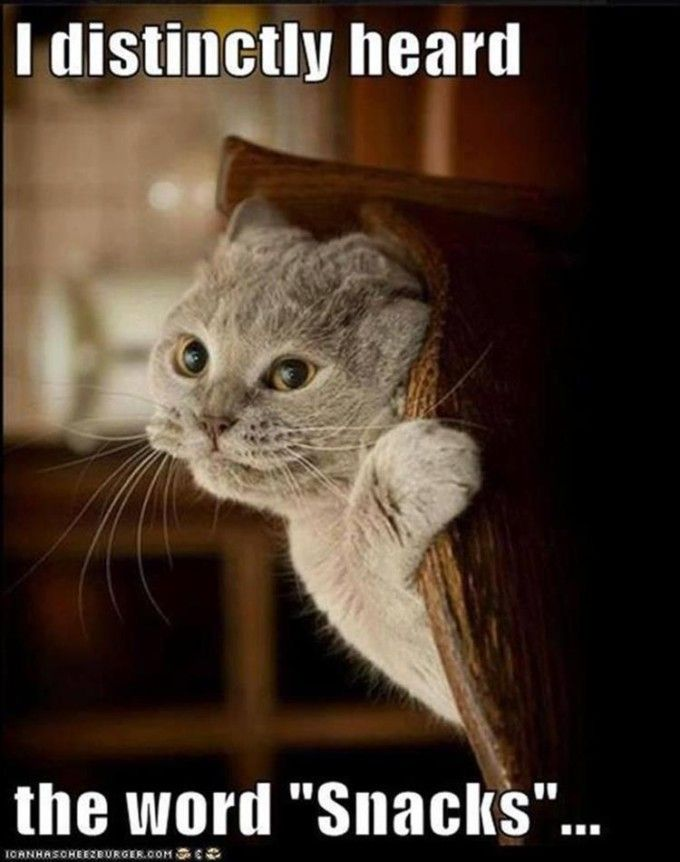 24 Funny Animal Pics for Your Thursday | Love Cute Animals