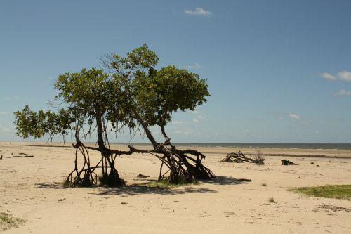 Pesqueiro Beach - Marajó Island, Pará