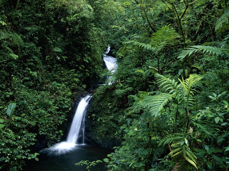 Cloud Forest Reserve in Monteverde, Costa Rica. It is a cloud forest, not a rain forest, due to its elevation of 4,724 ft above sea level. It covers a shocking 26,000 acres and is home to more than 400 species of bird, over 2,500 species of plant and around 420 different types of orchid, Monteverde Cloud Forest is like nowhere else on Earth.
