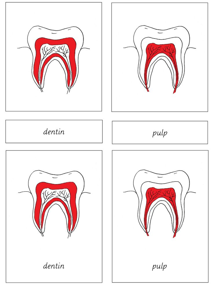 Elementary Observations: Free Human Biology Materials - parts of the tooth