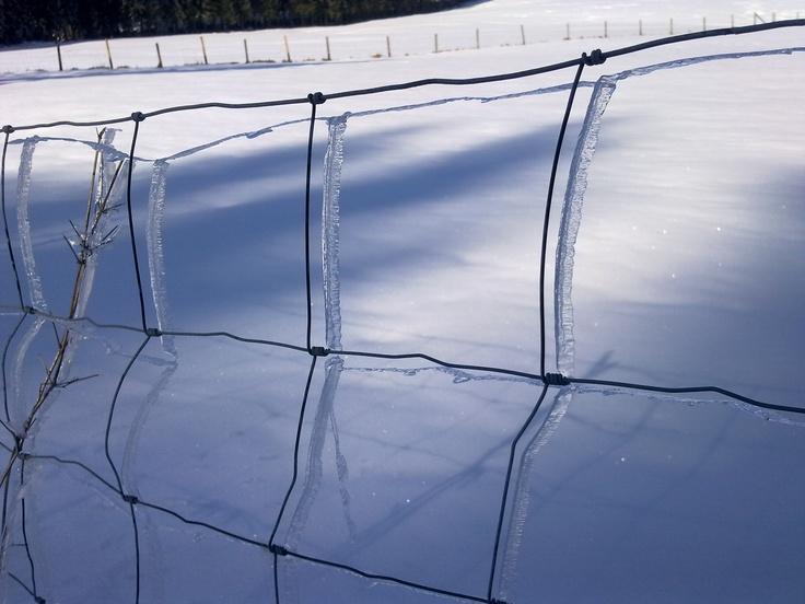 In der Eifel liegt auf den Feldern bei der Hohen Acht wieder zentimetertiefer Schnee. Wie ein Schatten wölben sich Eisschichten um die Gitter eines Maschendrahtzauns.