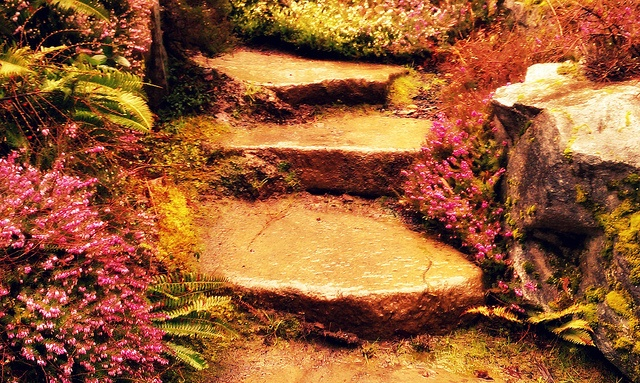 Stone Steps with Flowers by J. M. Richards, via Flickr