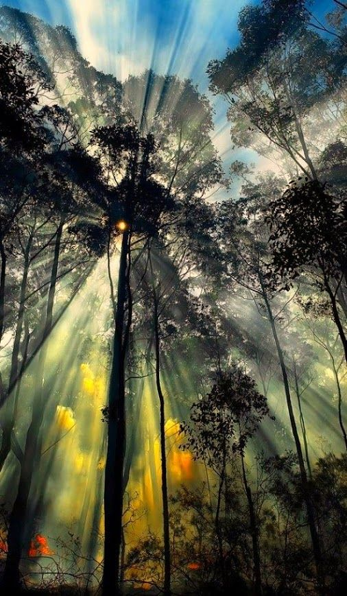 """The word """"komorebi"""" in Japanese literally means the scene produced by interplay of sunlight and trees."""