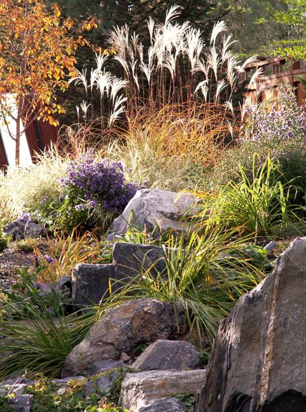 a stunning display of grasses