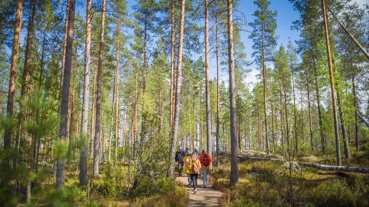 Today is Finnish Nature Day! Celebrate it by going to a nearby national park or forest #NatureDay #Finland100 #Helvetinjärvi #Tampere - Visit Tampere - @VisitTampere