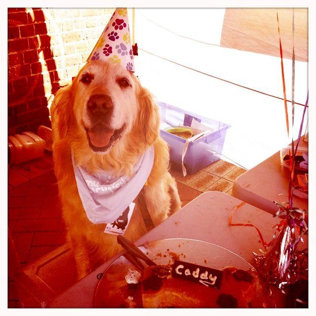 Happy Birthday Caddy...our favourite dog @ SFM!