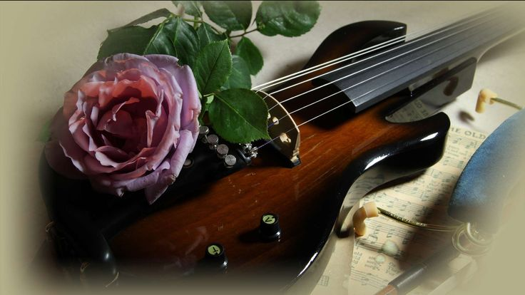 Violin Rose Wallpaper String violin with a rose.