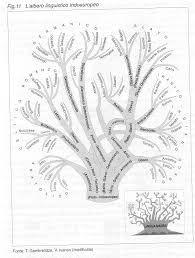 Risultati immagini per l'albero dei verbi