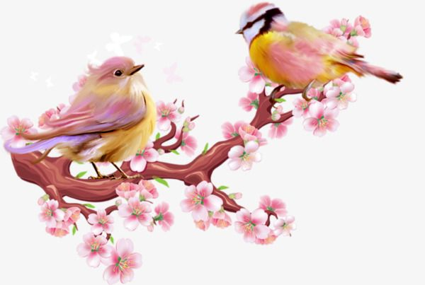 Peach Blossom Birds Peach Clipart Birdie Lovely Png Transparent Image And Clipart For Free Download Birds Painting Peach Blossoms Birds