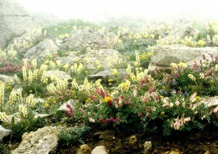 Biota of North America Program - native plants