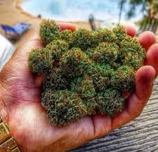 Weed Online Supplier offers a wide variety of the finest Indica, Sativa, and derivative products at a variety of price points to choose from.we are devoted to the selection of unique and rare genetics with overall quality, you would definitely get your money's worth at weed online supplier Props.call or whatsapp us  +1 978 295-0424 or visit our site at https://www.weedonlinesupplier.com/