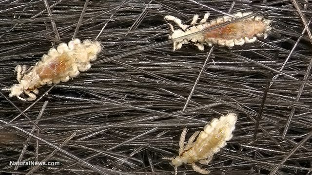 Ah, love is in the air...Almost a million Tinder users are infected with pubic LICE! Got an itching for a hookup? http://www.naturalnews.com/053042_pubic_lice_dating_apps_Tinder.html